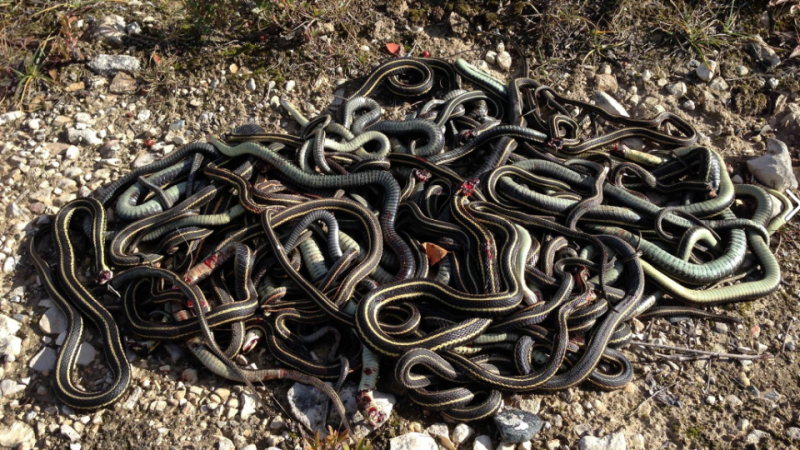 photos/deadsnakes.png