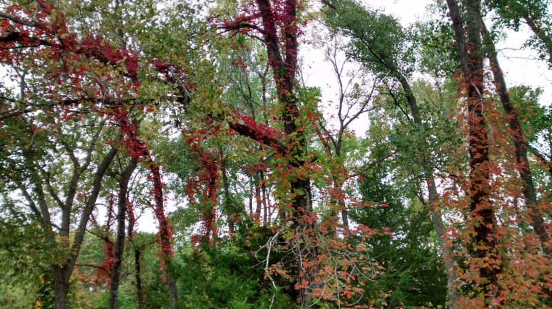 photos/fall-foliage.jpg