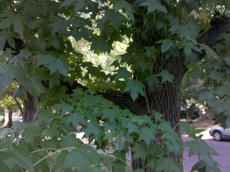 photos/tree-squirrel.jpg